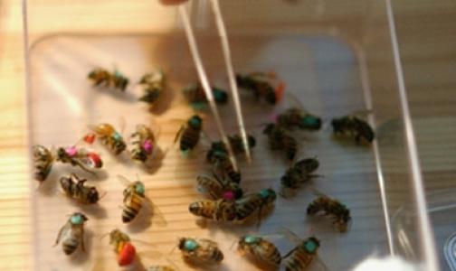 Пчелы кусаются на здоровье