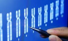 За рак яичников ответственны хромосомы