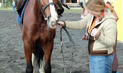 «Доктор Лошадь» ищет волонтеров