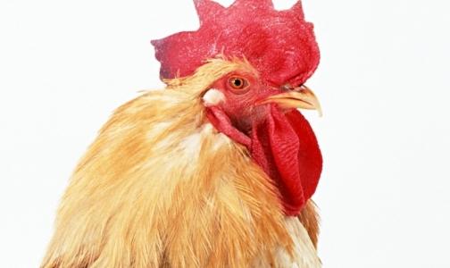 Ограничения на ввоз птицы из Германии снимут в конце февраля