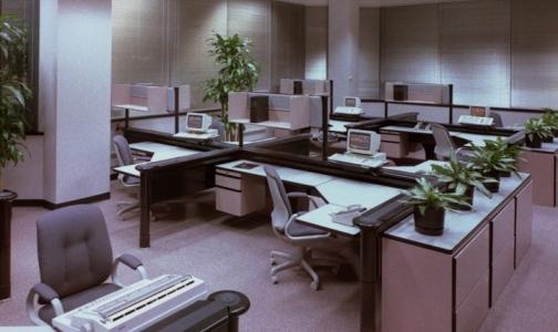 Офисные растения берегут здоровье