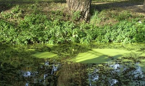 Число утонувших в Ленобласти с начала лета перевалило за сотню