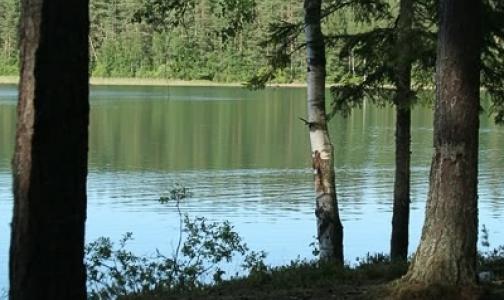 В водоемах Ленобласти с начала лета погибли 97 человек