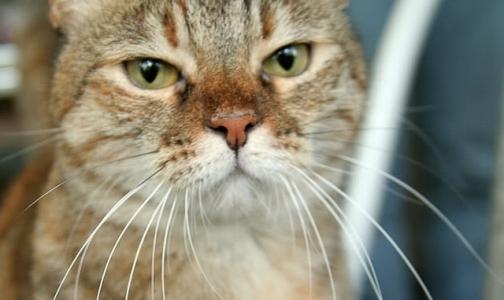 Паразиты из кишечника кошек могут вызывать опухоли мозга