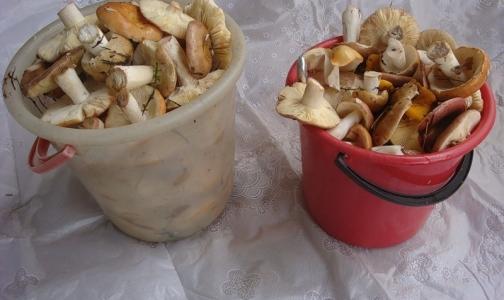 3 человека отравились грибами, один из них умер