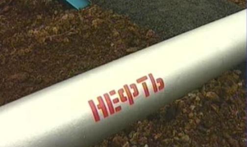 Разливы нефти в Финском заливе сегодня убирали студенты петербургских вузов