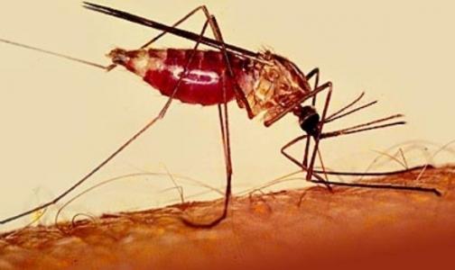Испытания вакцины против малярии показали блестящие результаты