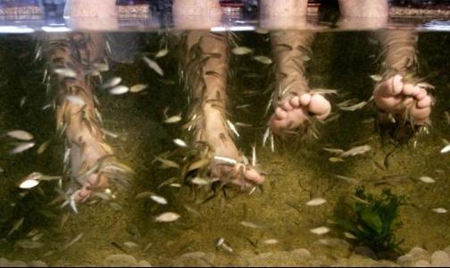 Рыбный педикюр опасен для здоровья