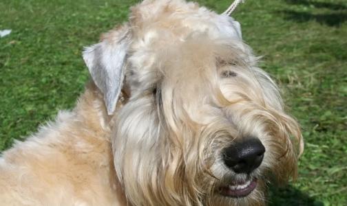 Первых в России собак-терапевтов готовят в Петербурге