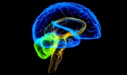 Алкоголизм связан с особым строением мозга