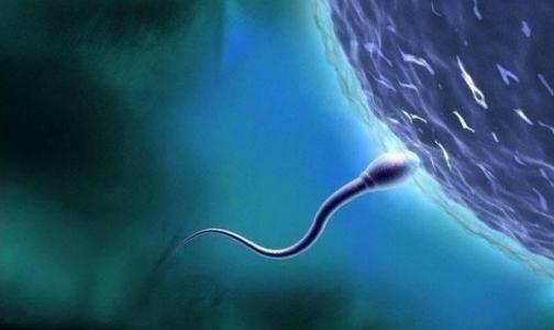 Утверждены стандарты ЭКО: Минздрав предложил анестезию сперматозоидам, яйцеклеткам и эмбрионам