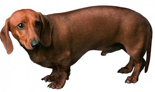Роспотребнадзор: Россияне заражаются глистами от собак и водопроводной воды