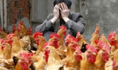 Роспотребнадзор рассказал, как уберечься от птичьего гриппа во время поездки в Китай