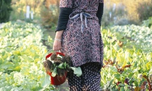 В 30 садоводствах Ленинградской области открываются медпункты для дачников