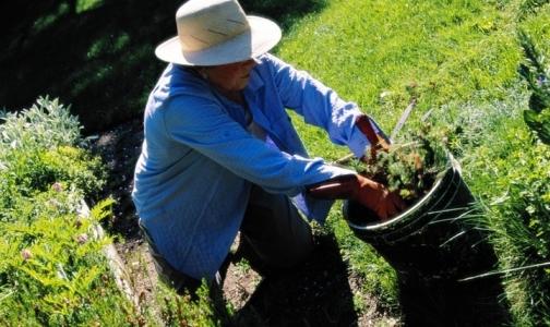 Медпункты для петербургских дачников в садоводствах Ленобласти откроются 1 мая