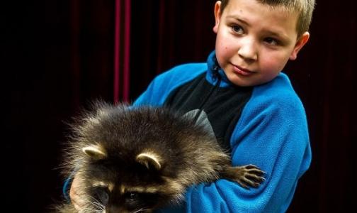 Петербуржцев лечат «енототерапией»