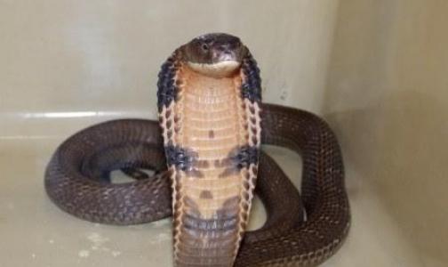 Не дразните змею