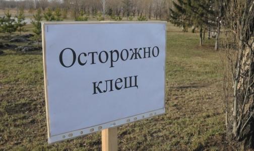 В Петербурге больше 250 человек заразились «клещевыми» инфекциями