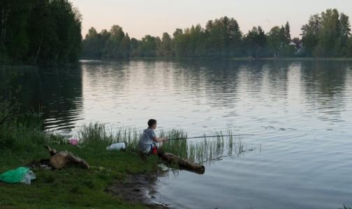 В водоемах Выборгского района нашли фекальные бактерии