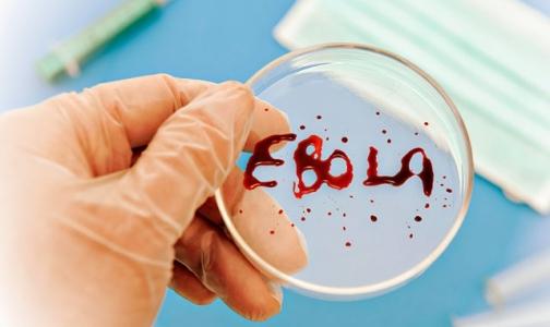 Официальное число жертв лихорадки Эбола перевалило за 2000 человек