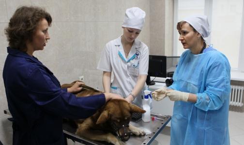 Полтавченко открыл в Петербурге новую ветеринарную клинику