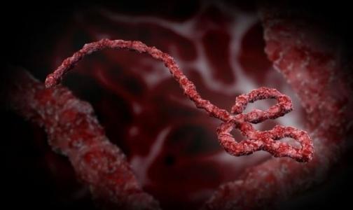 ВОЗ: секс может помешать борьбе с лихорадкой Эбола