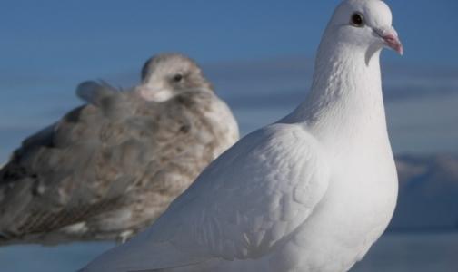 Роспотребнадзор советует путешественникам держаться подальше от птиц