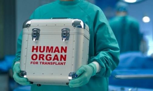 В Петербурге выросло число пациентов с пересаженными органами