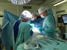 В НИИ онкологии пациентке трансплантировали выращенный в ее теле «протез»: Фоторепортаж