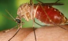 В Петербурге зарегистрировано уже 4 случая заболевания малярией