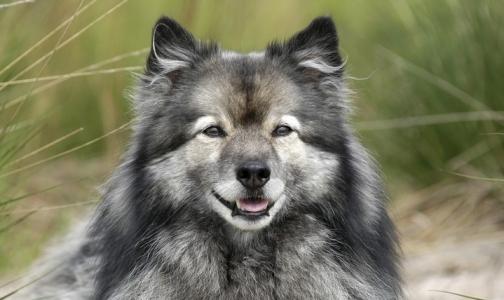 Собаки не реагируют на запах испуганного человека