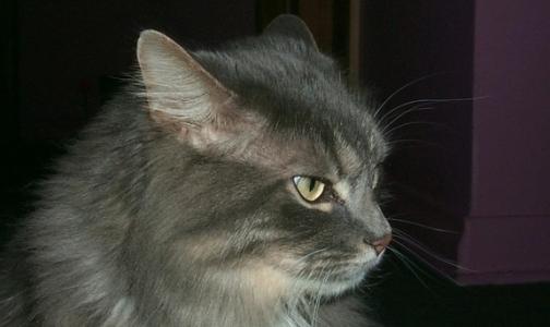 Россиянин умер из-за укуса своей кошки