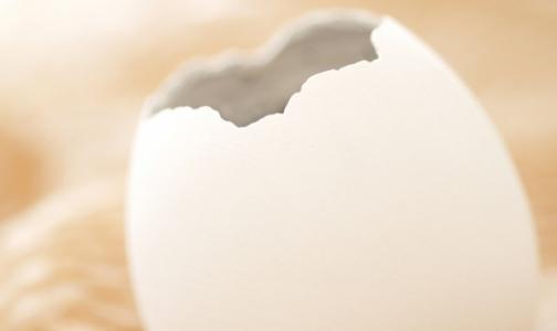 В петербургских яйцах искали сальмонеллу