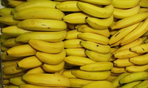 Россельхознадзор: Человек не может заразиться «кровяной» болезнью бананов