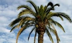 Почему введение акцизов на пальмовое масло не снизит его потребление в России
