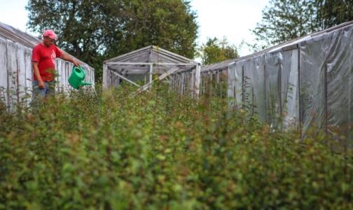 Для петербургских дачников открываются амбулатории в садоводствах