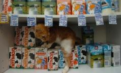 В петербургских супермаркетах нашли еще две марки поддельного молока