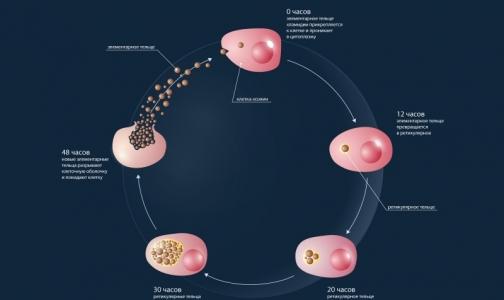 Ученые нашли способ борьбы с хламидиозом