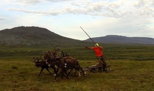 В Гринпис назвали главную причину вспышки сибирской язвы на Ямале