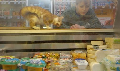 В Петербурге в «фермерской» сметане не нашли молока, но обнаружили кишечную палочку
