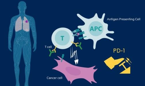 Нобелевскую премию по медицине присудили за открытие в области терапии рака