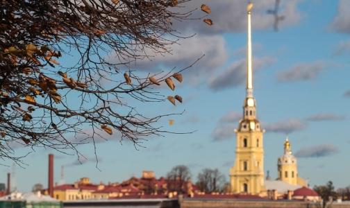 В октябре вместе с рождаемостью в Петербурге выросла смертность