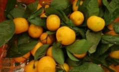 Врач рассказала, почему реакцию на мандарины не всегда правильно называть аллергией