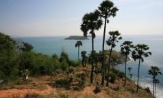 В январе 4 петербуржца привезли из Таиланда лихорадку Денге