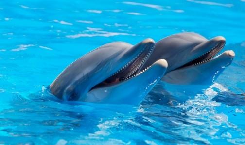 Эксперт: Дельфинотерапия — «развод для родителей», которые верят в чудо