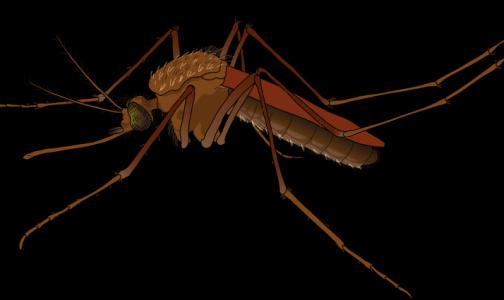 «Спортсмены в опасности»: ученые рассказали, как комары выбирают жертв для укуса