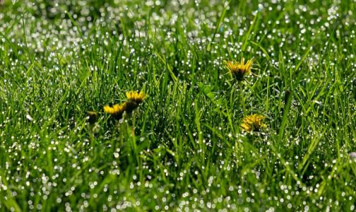 Раундап и другие популярные средства против сорняков в Европе признали опасными для здоровья