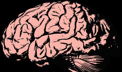 Ученые назвали профессию, из-за которой уменьшается мозг