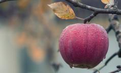 Ученые: с одним яблоком мы съедаем более 100 млн бактерий