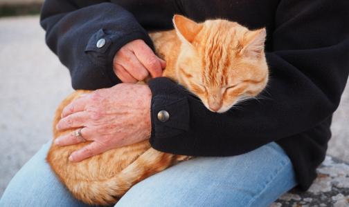 Мой кот меня бережет: Интернет-пользователи рассказали, как их лечили питомцы